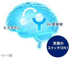 通常の脳では